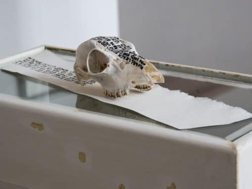 Knochen, Stein, Papier